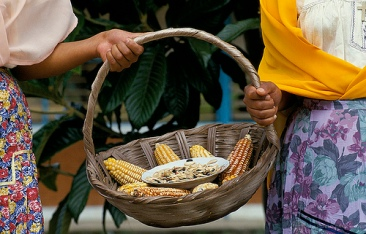 corn by World Bank Photo Collection