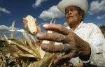 corn_mexico_quer_RTR1LB7Q_1
