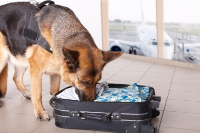 drug dog sniffing suitcase