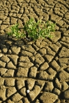 Environment -Climate change and apaptation -- dry ground