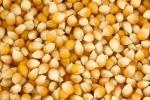 corn - loose yellow corn