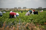 Migrant farmworkers