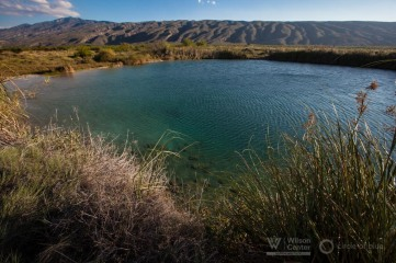 In one conservation effort near Cuatro Cienegas, a  pool named Poza Escobedo, on the property of cattle rancher Alfonzo Gonzalez, was restored to its original state, leading the area around it to regenerate its humidity and lush flora and fauna.