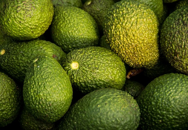 Fruit Hass Avocado Harvest Avocados Picked Green