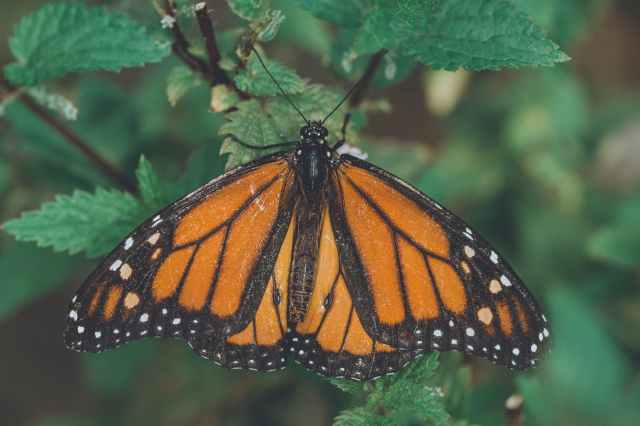 orange black and white butterfly on green leaf plant